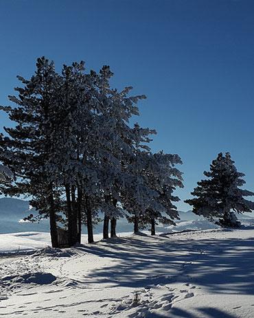 zlatibor zima 2020